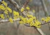 봄꽃 향기 가득한 한밭수목원에서 봄 마중해요