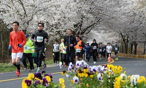 대전 환상의 벚꽃 드라이브 코스는 어디_참고사진(지난해 물사랑 대청호 마라톤) (3).jpg
